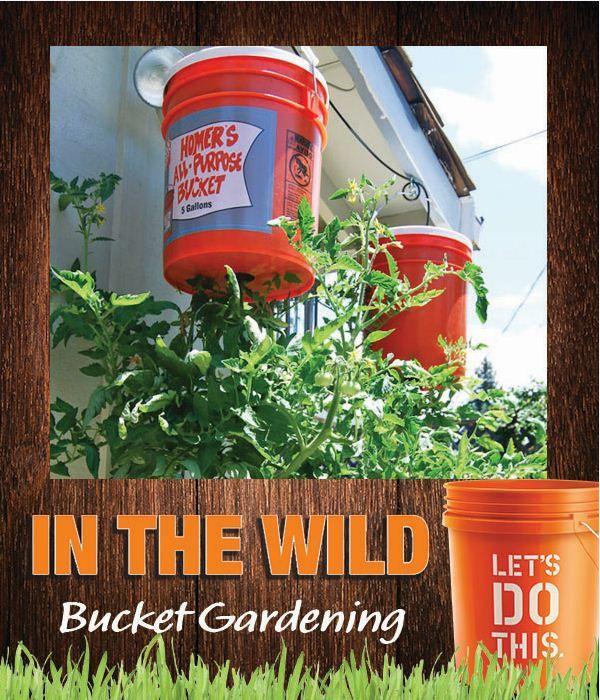 bucket gardening. Bucket Gardening With Home Buckets