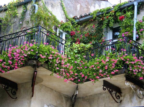 Hängende Balkonpflanzen Für Sonnige Balkons Mit Grün Und Und Rosa ... Balkonpflanzen Fur Sonnigen Balkon