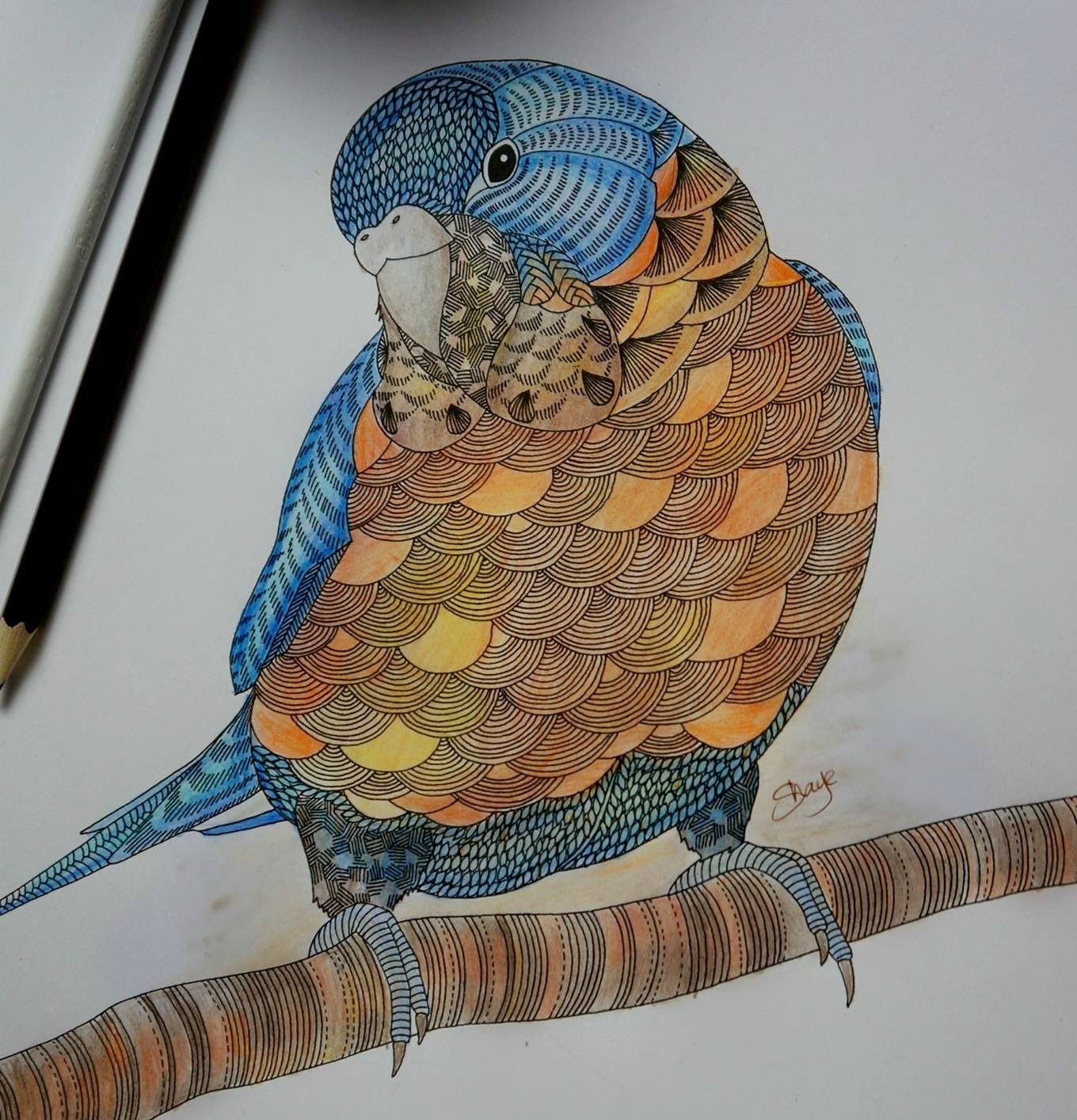 Millie Marotta S Animal Kingdom Bird Colouring With Vaseline Blending Millie Marotta Animal Kingdom Animal Kingdom Colouring Book Animal Coloring Books