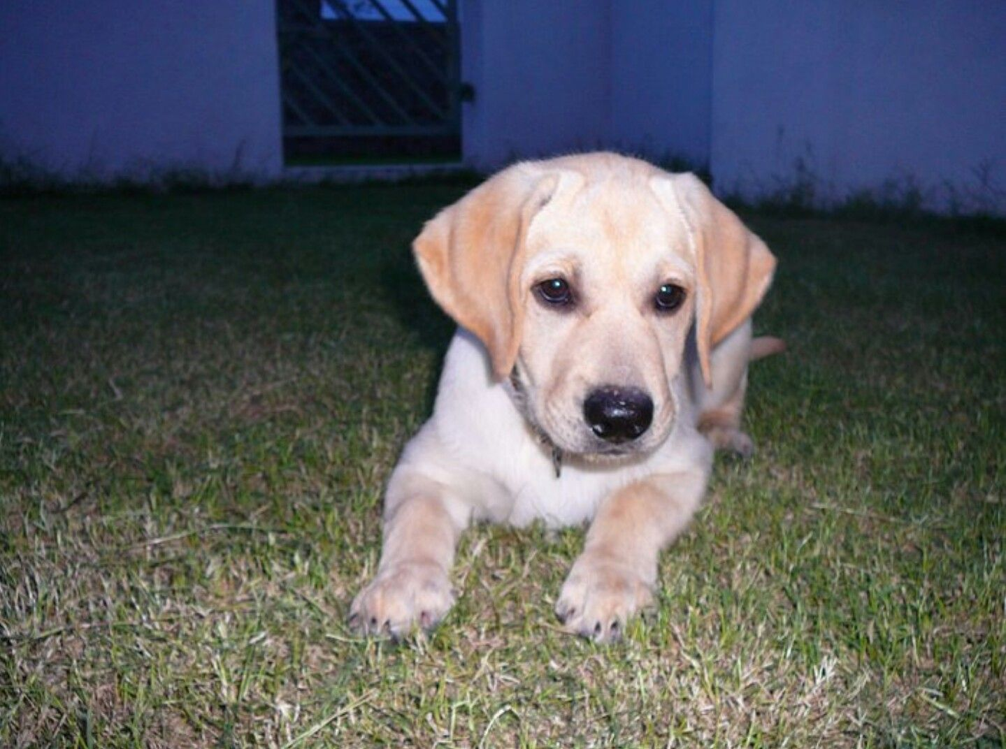 Bady at our backyard, when he was a puppy. #backat009 @katrinihln