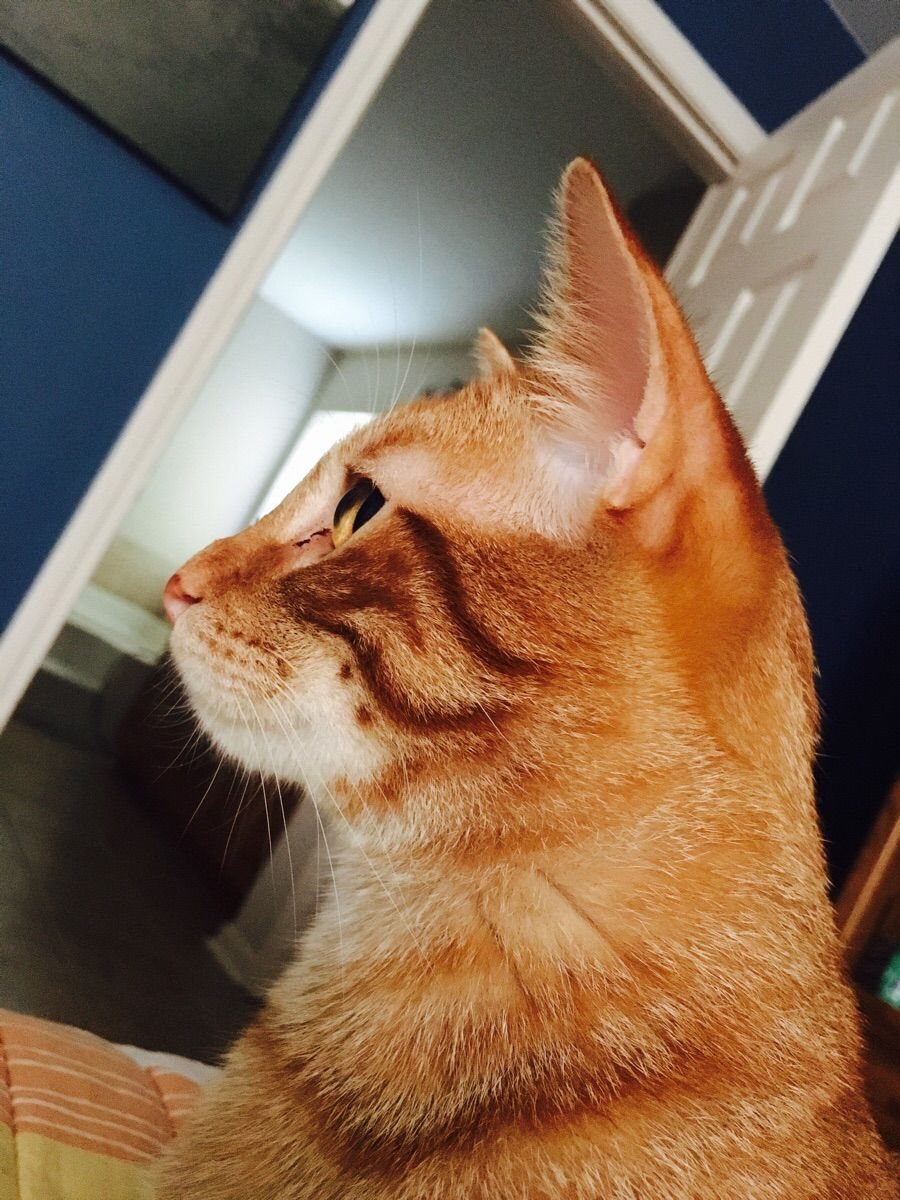 Look at my newly adopted cat Ravioli... his face is pretty damn handsome. http://ift.tt/2vaVhAa