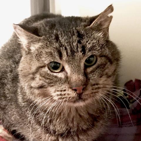 Watch What Happens When a BattleScarred Feral Cat Meets