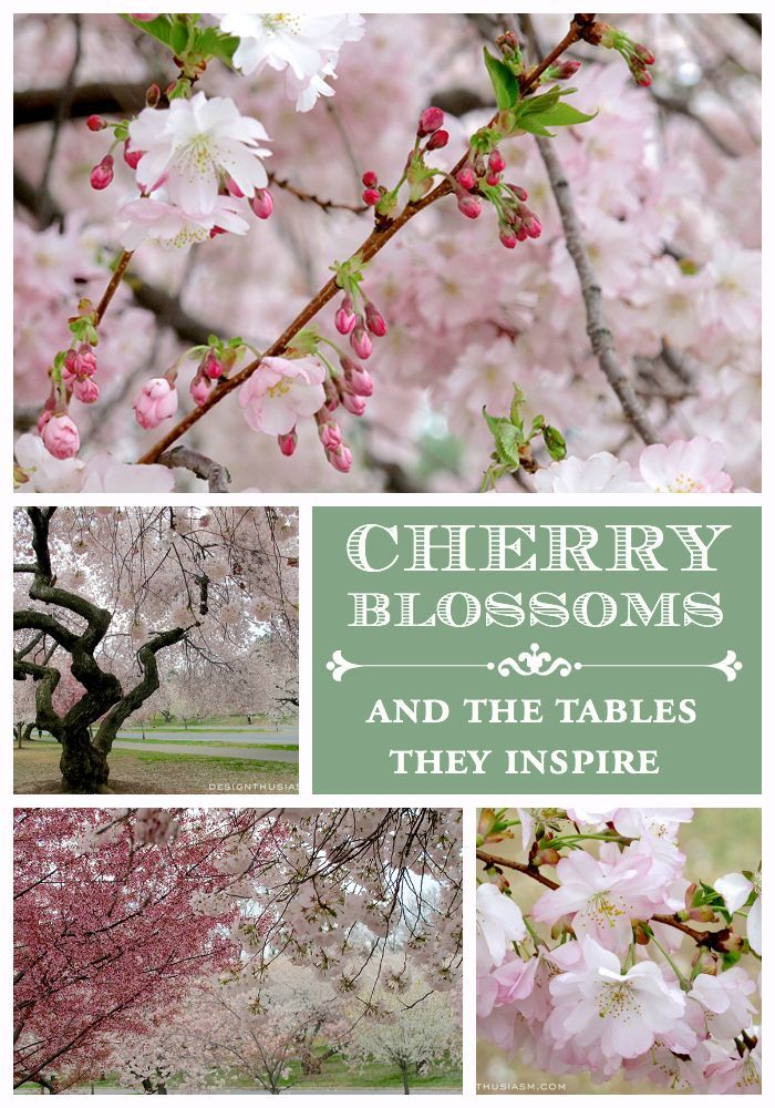 Cherry Blossom Decor How These Branches Inspire Spring Table Settings Cherry Blossom Decor Cherry Blossom Party Blossom