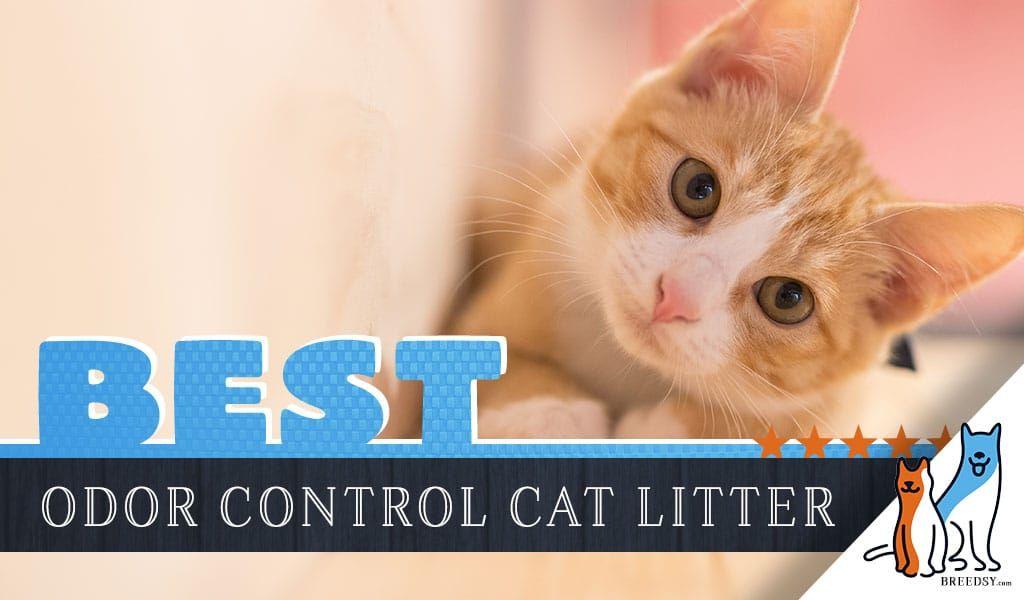 Diy homemade cat litter deodorizer recipe best cat