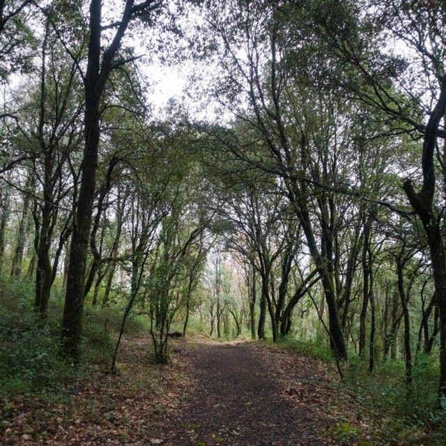 Me alegra tener esta preciosidad de paisajes a menos de cinco minutos de casa... doy las gracias al universo por haberme traído hasta aquí este año, en el momento más oportuno de mi vida para poder empaparme de este paraje y gozar de su belleza. Y desde aquí aprovecho para hacer un recordatorio totalmente slow 😂 Aviso que MAÑANA es el último día para hacer vuestro pedido de pulseras de San Valentín con el 10% de descuento. Ahí lo dejo 🙈 . . . #woods #bosque #invierno #winter #morningwalks…