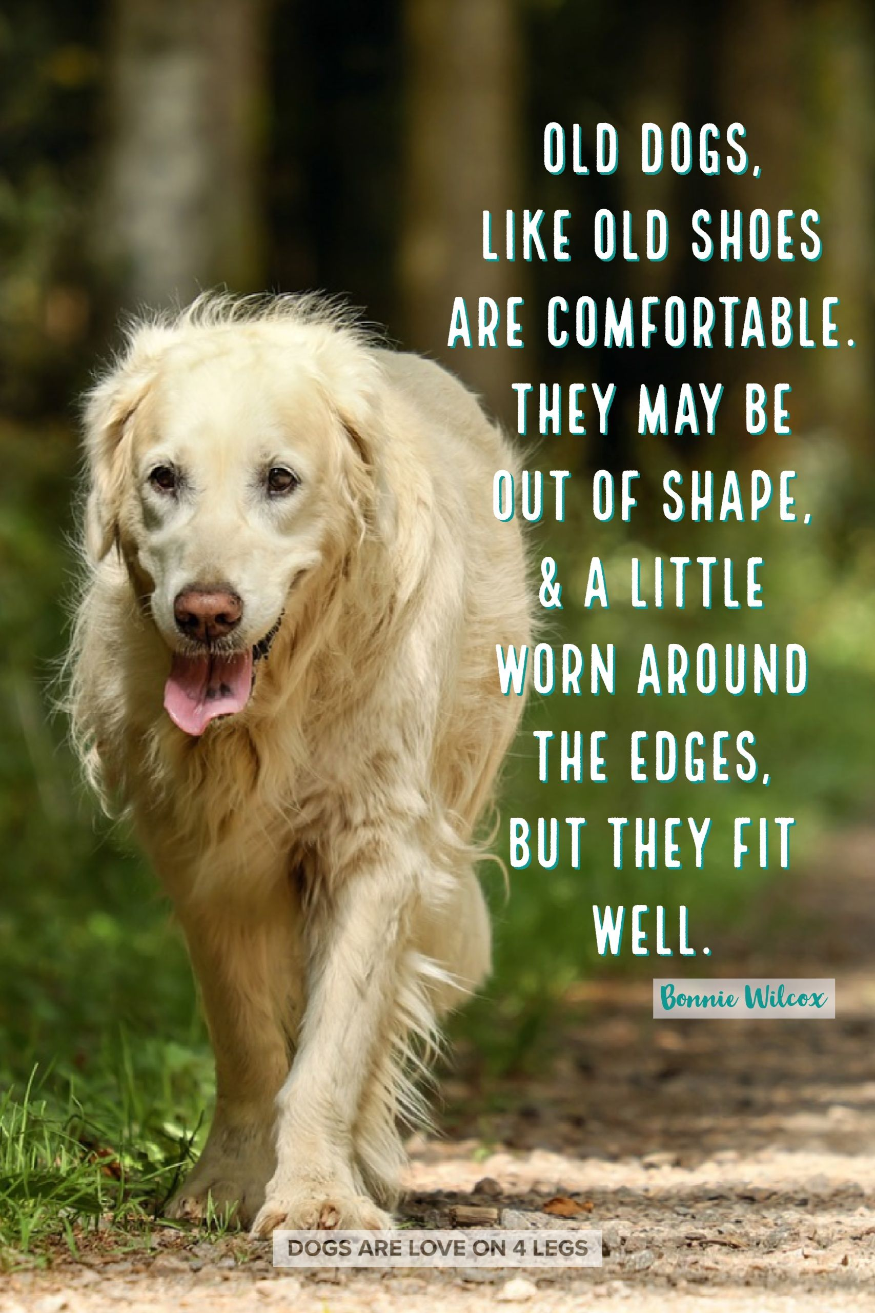 Old Dogs Like Shoes Are Comfortable Dog Dog Quotes