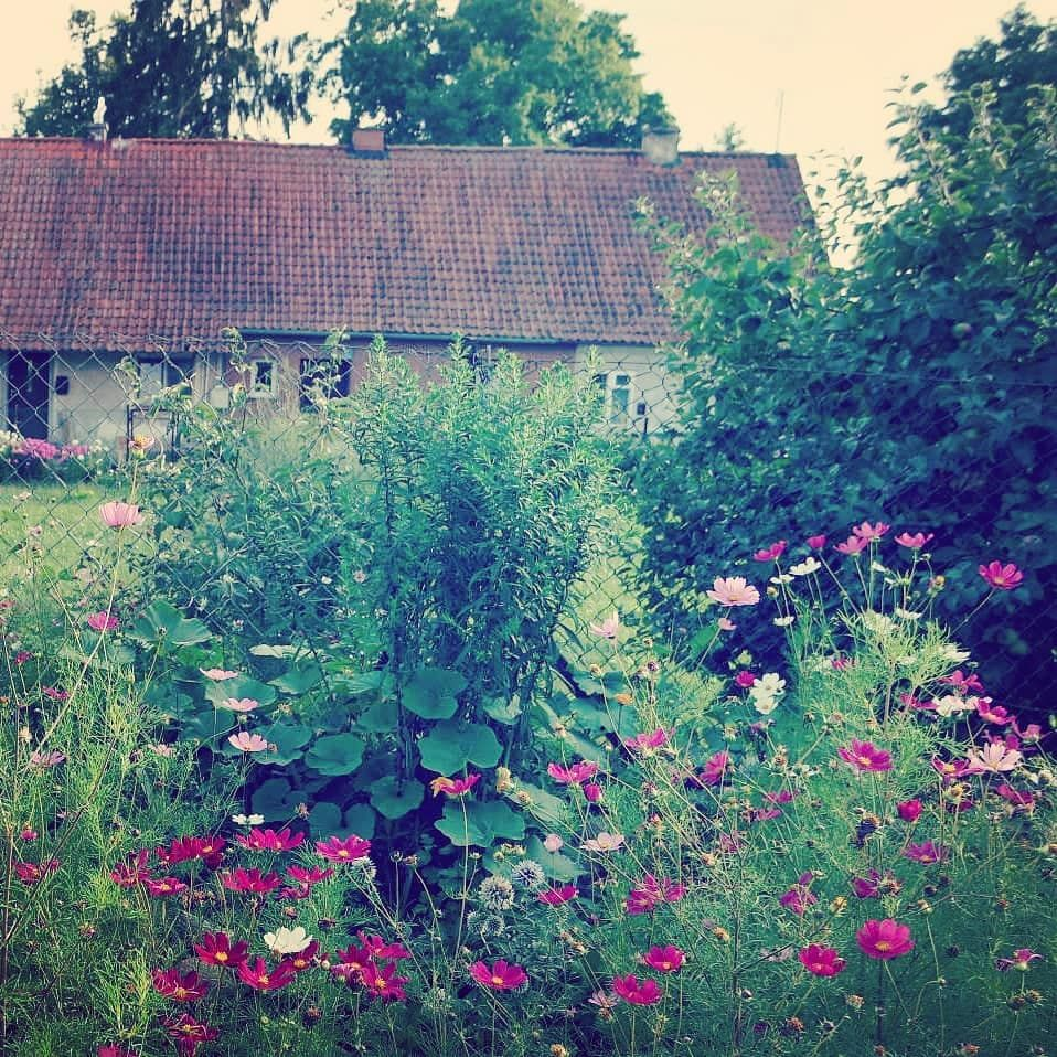 Urlaubserinnerung Vom Letzten Jahr Verwilderter Bauerngarten In Den Masuren