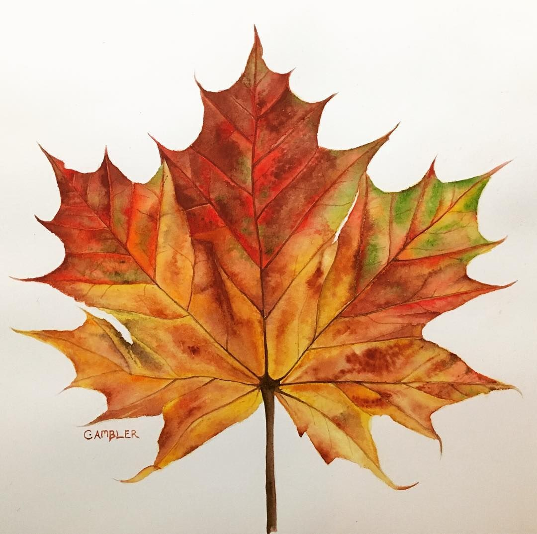 Autumn Leaf Watercolour Painting Autumn Autumnleaves