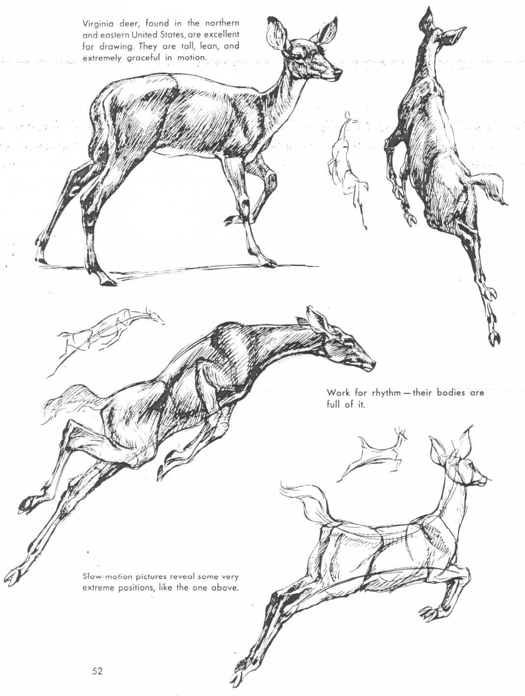 Art Of Animal Drawing Book The Art Of Animal Drawing In 2019