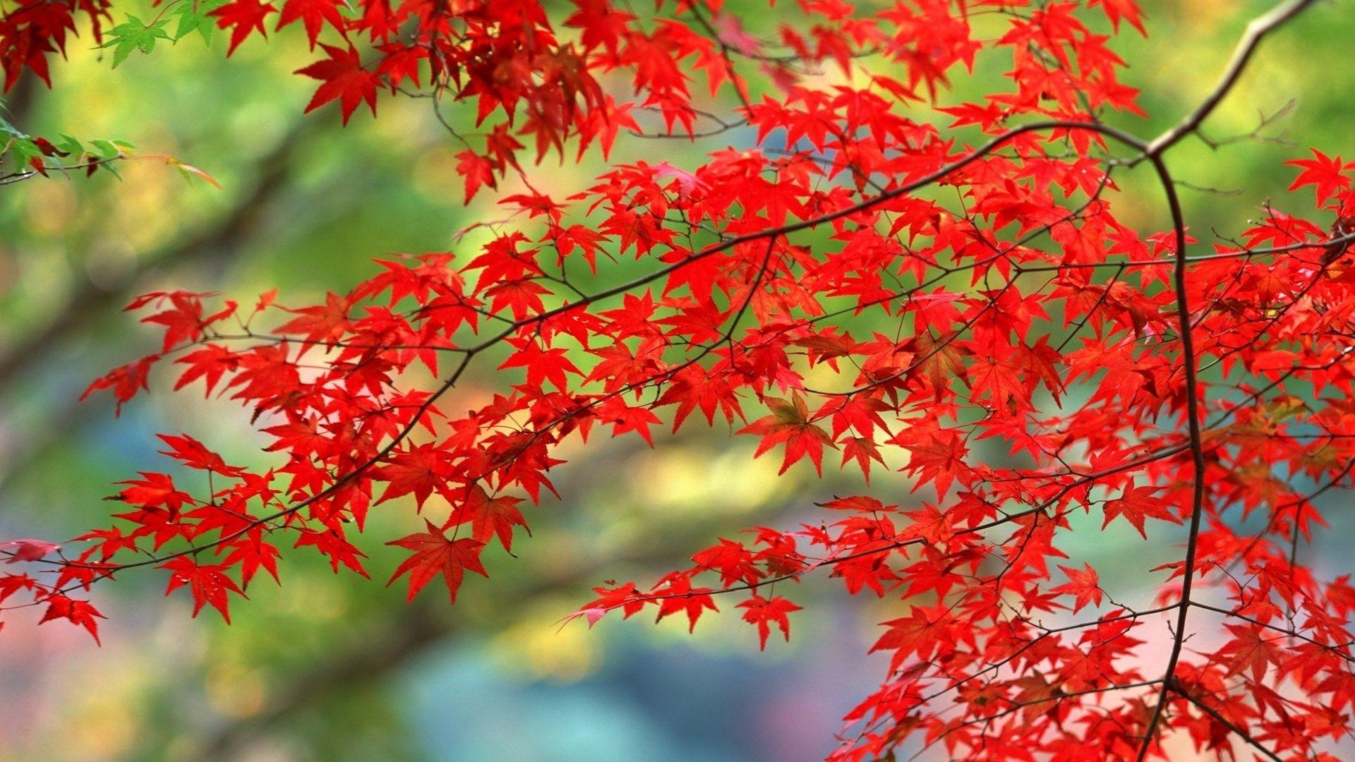 autumn hd wallpapers 1080p high quality ololoshenka