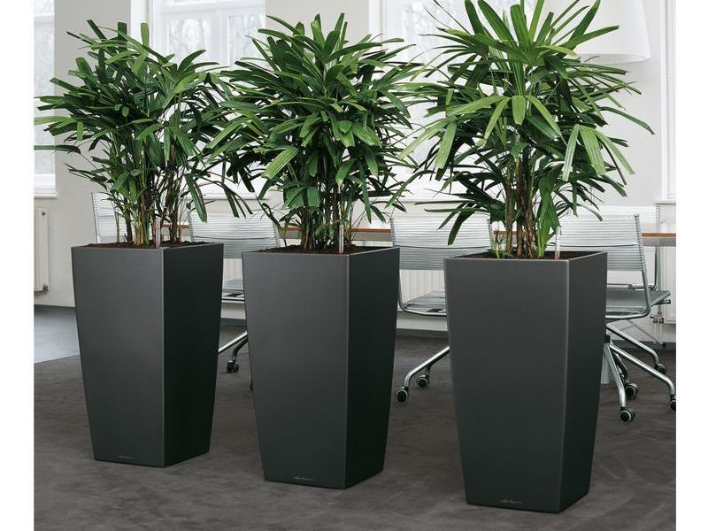 Gardening in restricted spaces indoor planter boxes Tall narrow indoor plants