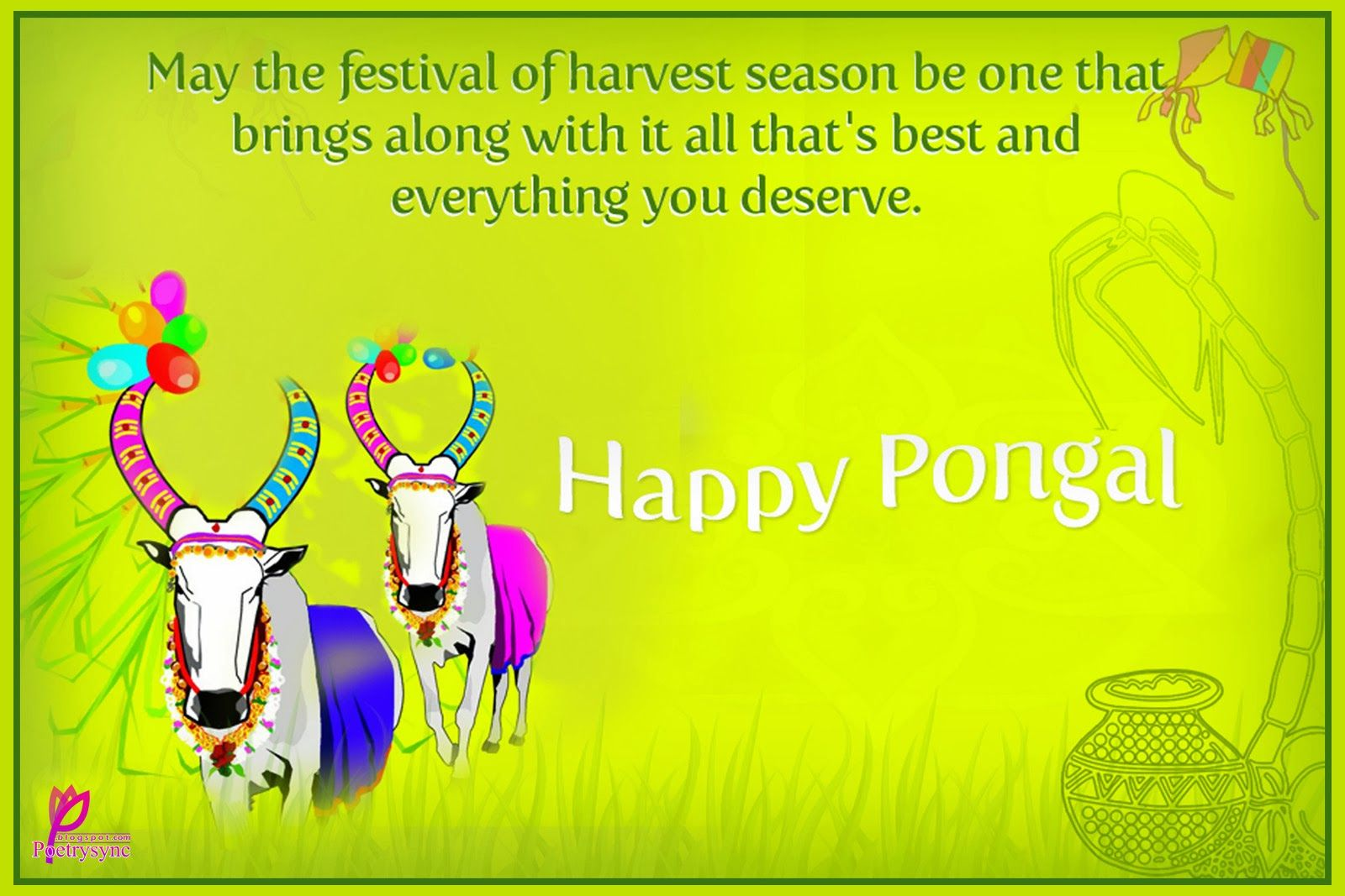 Pongal Festival Essay Traditional Pongal Celebrations 13 2017