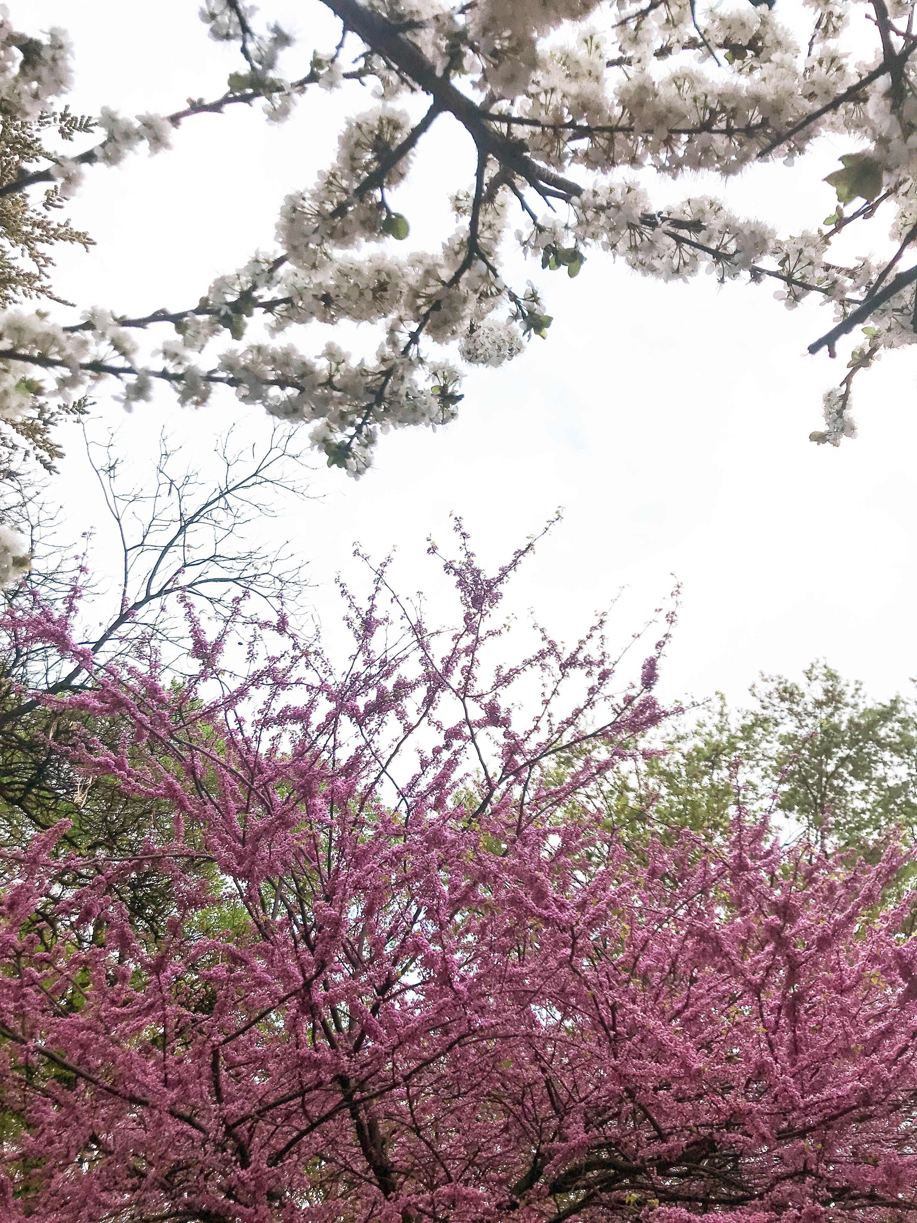 Eva S Enamoured By May Favorites Eva Darling Flowering Trees Crab Apple Cherry Blossom Tree