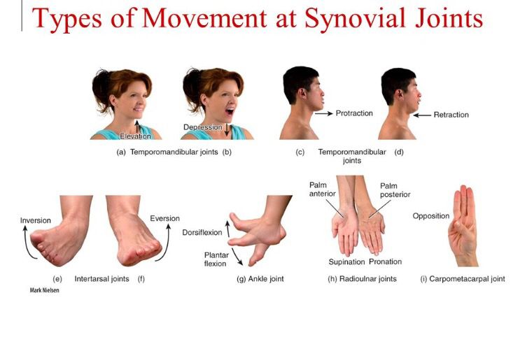 Movements Of Synovial Joints Anatomy Synovial Joint
