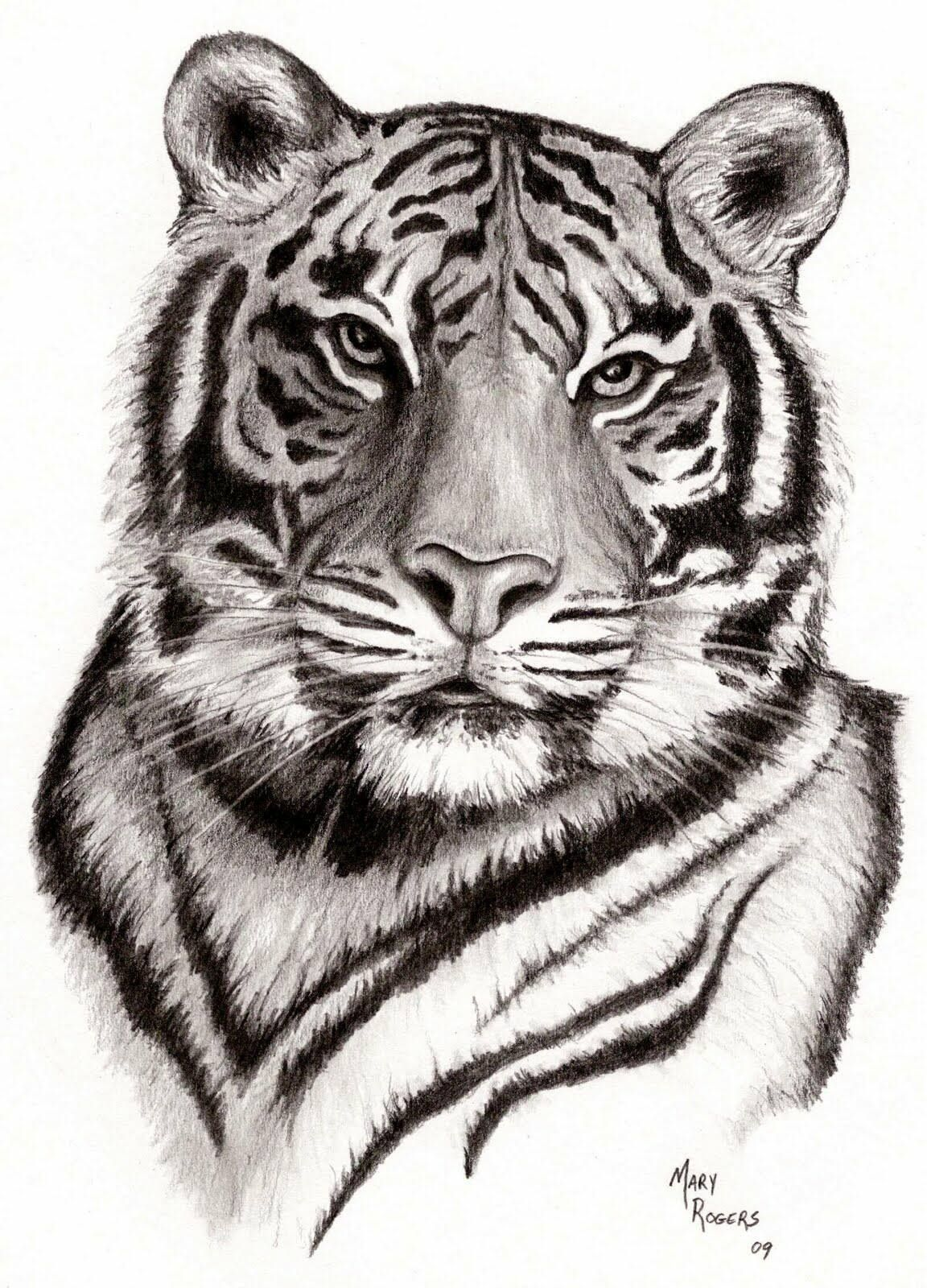 Amazing tiger art Art in 2019