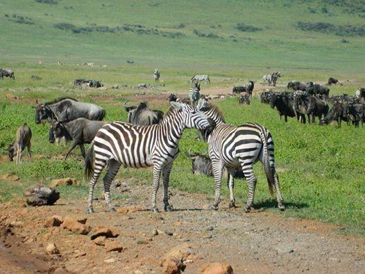 tanzania safari and zanzibar honeymoon