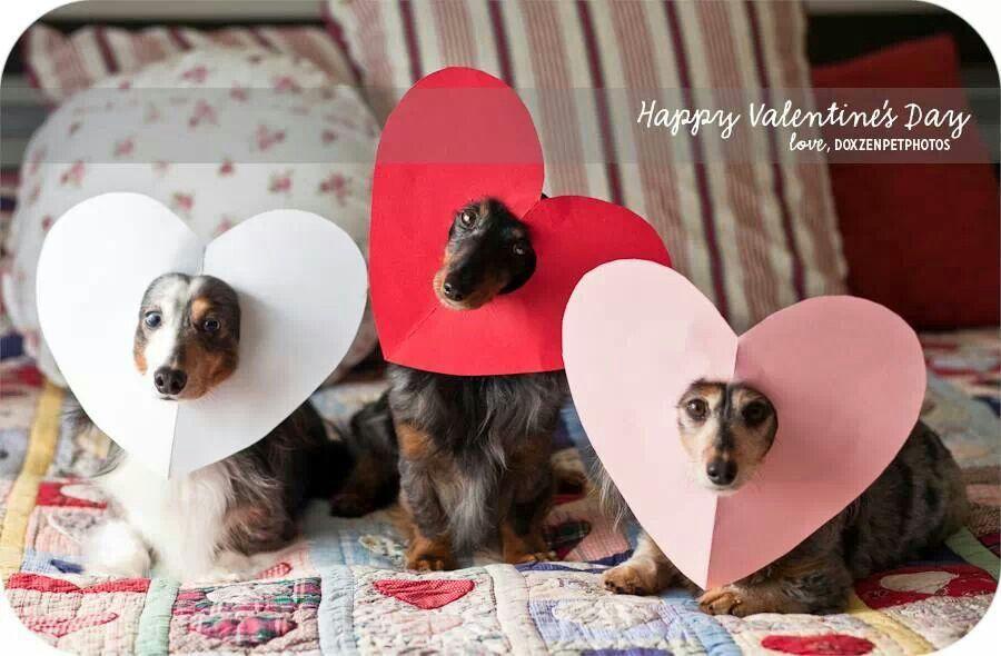 Happy Valentine S Day Valentines Day Dog Dog Valentines Dog