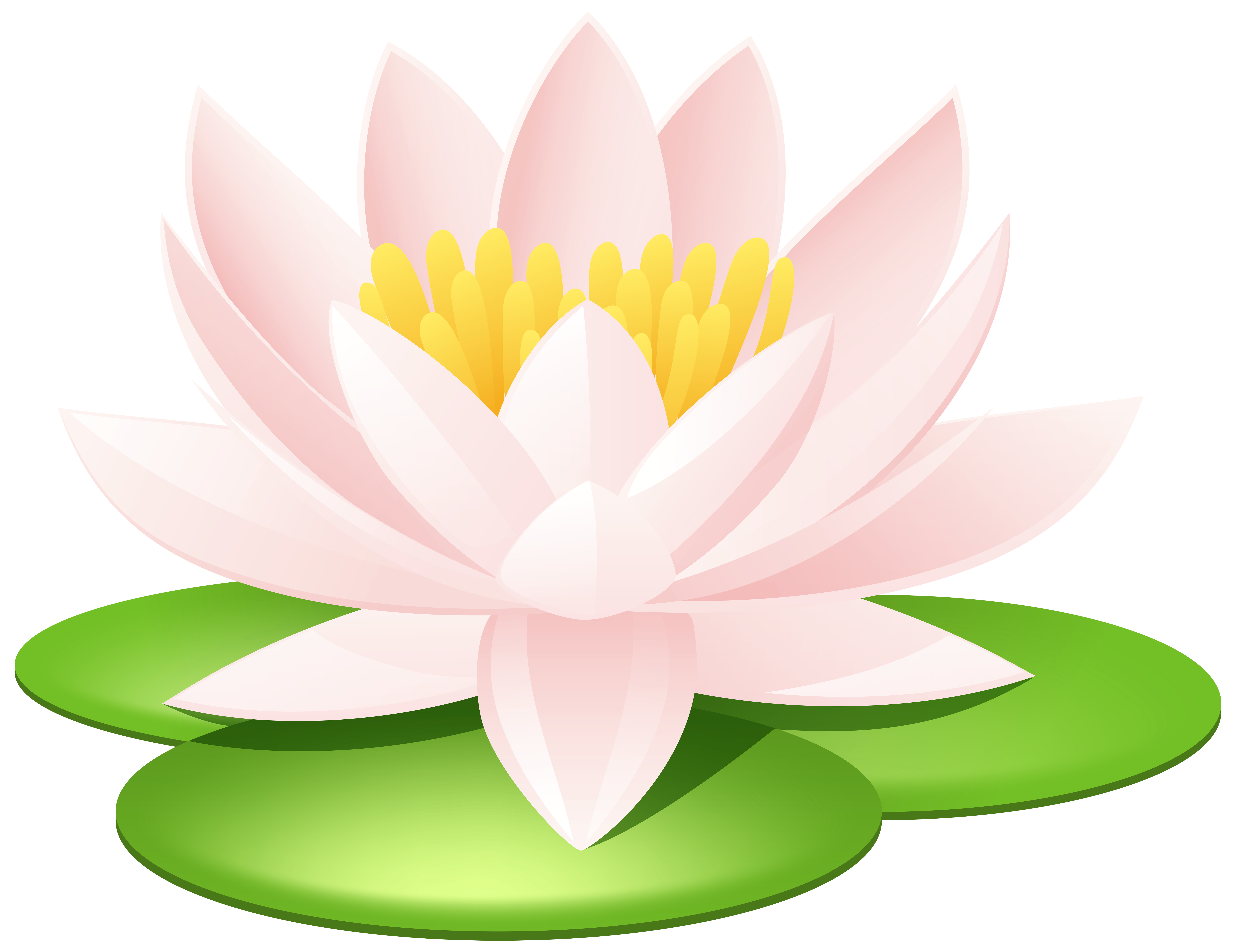 Water Lily Transparent PNG Image Кувшинки, Картинки