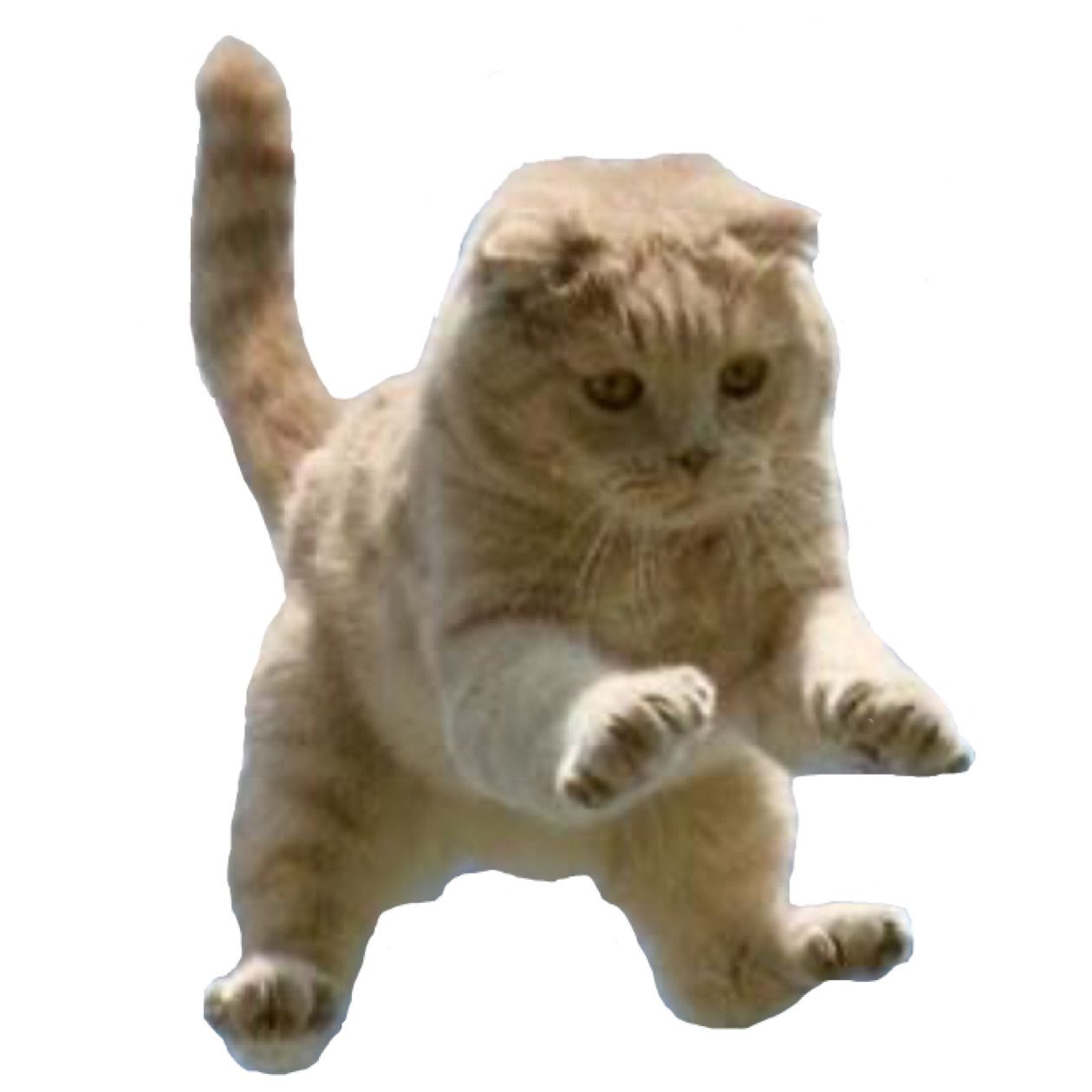 Jumping Cat Png Jumping Cat Png Photo And Video