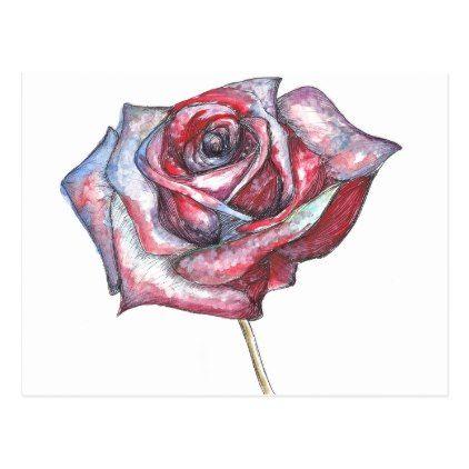 #pretty - #Delicate Beautiful Rose Postcard