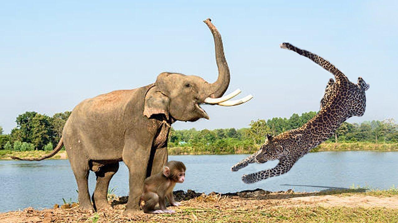снимках слоны и пантеры картинки игр массажными мячиками