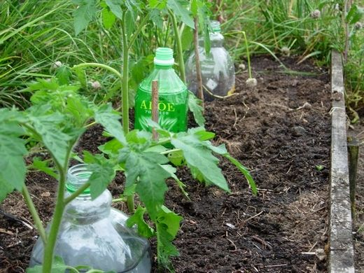 interesting idea for drip irrigation- recycled bottles farm-girl-in-the-making