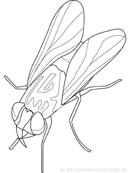 Coloriage Insecte A Colorier Dessin A Imprimer Kukaini Dessin