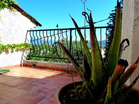 Bicarbonato de sodio en el jardín | Cuidar de tus plantas es facilisimo.com