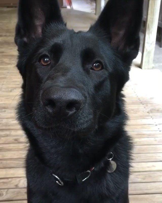 Pin On Hund