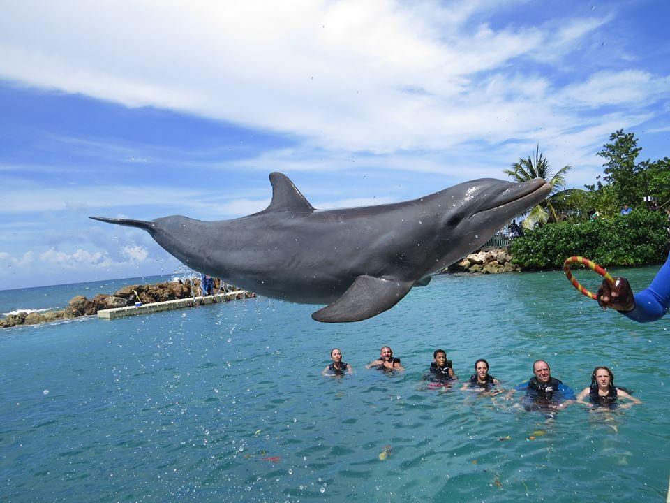 Should I Boycott SeaWorld? - Solo Mom Takes Flight | Jamaica ...
