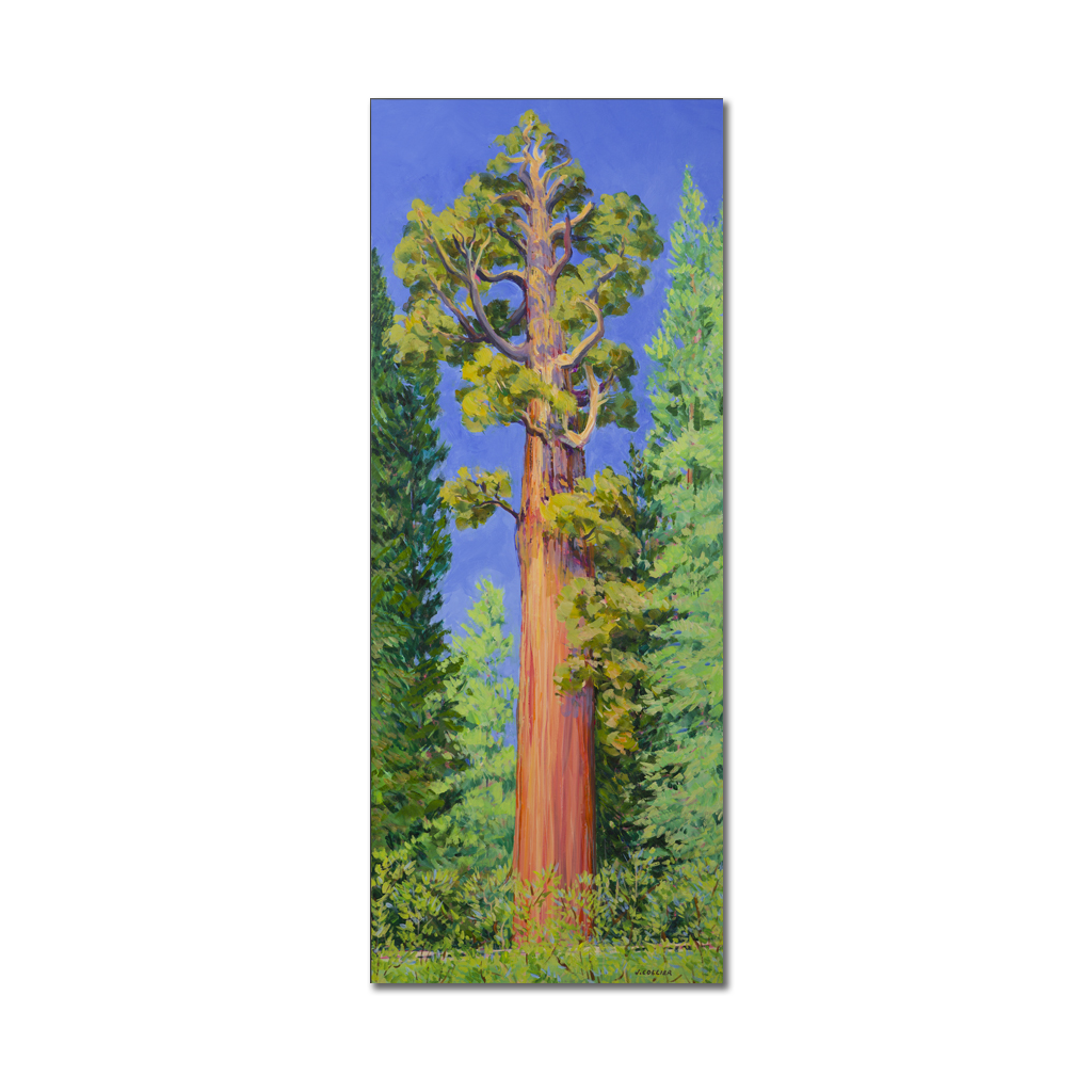26 Giant Sequoia Paintings By Joy Ideas Giant Sequoia Trees Sequoia Tree Placer County