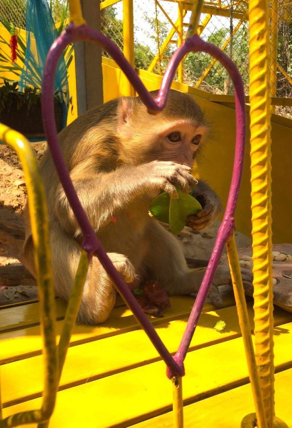 Monkey Who Spent 7 Years In Cage Now Has Her Very Own 'Palace'