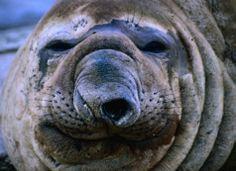 nariz de animais - Pesquisa Google