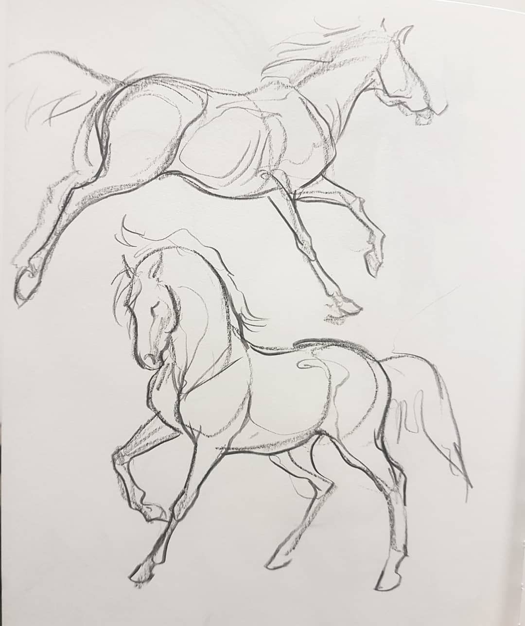 "Animal Artist & Illustrator on Instagram: ""Just some night sketches � .. #equine #equineart #horse"