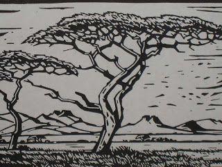 LENNARD'S BONSAI BEGINNINGS: Pierneef style bonsai.