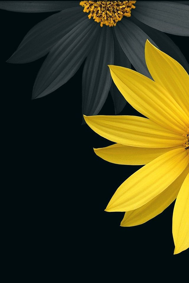 Black Flower Parallax Hd Iphone Ipad Wallpaper Papier Peint A