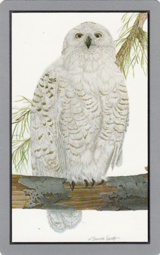 Genuine Swap/Playing Card - 1 SINGLE-  FLUFFY WHITE OWL - SIGNED in Collectables, Paper, Postcards, Playing Cards | eBay