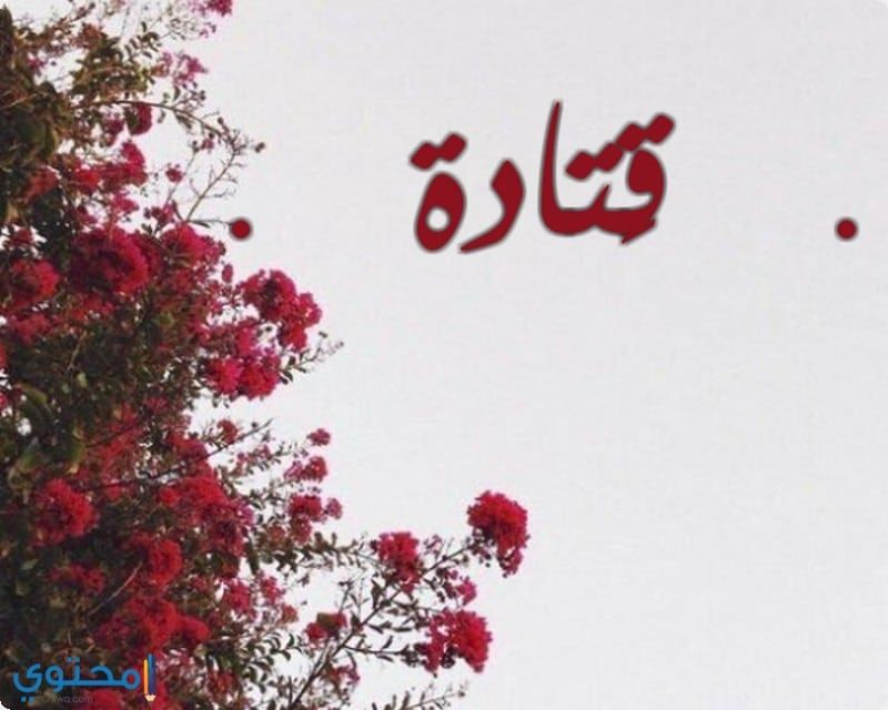 معنى اسم قتادة وحكم التسمية Qatada معاني الاسماء Qatada اصل اسم قتادة Red Peppercorn Peppercorn