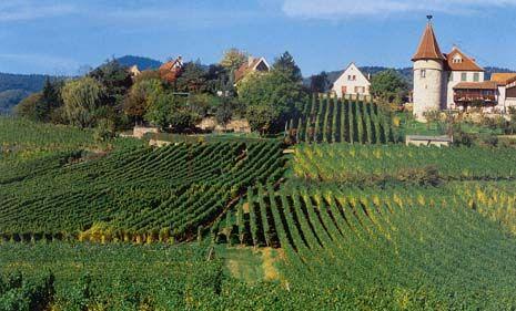 alsace vineyards - Pesquisa Google