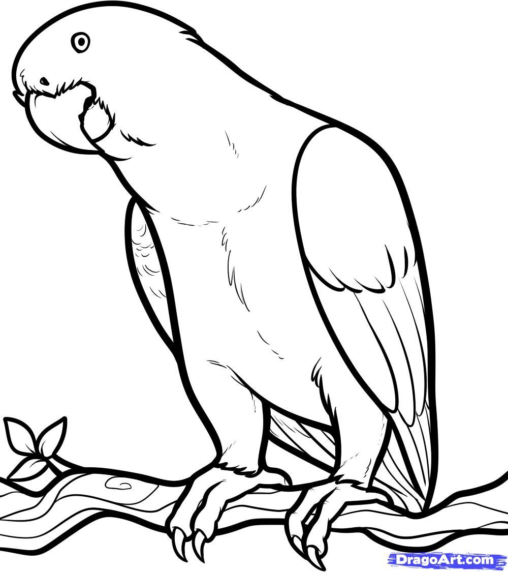 free coloring page of african animals african grey african grey parrot step by