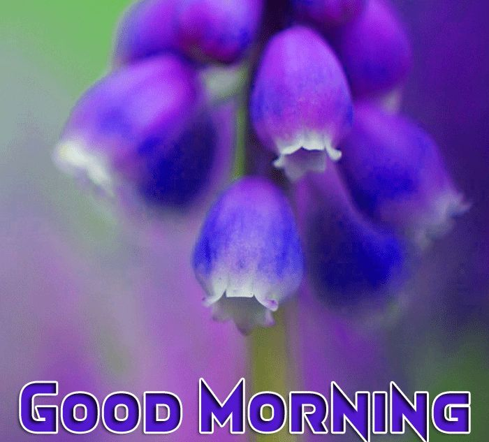good morning with purple flowers in 2020 | Morning images ...