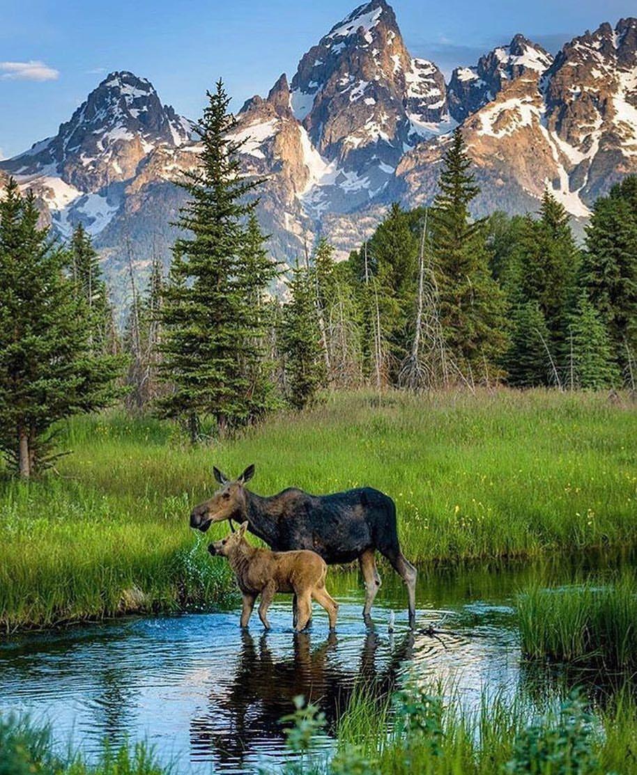 тогда изменился фото природа и животных напечатать только его