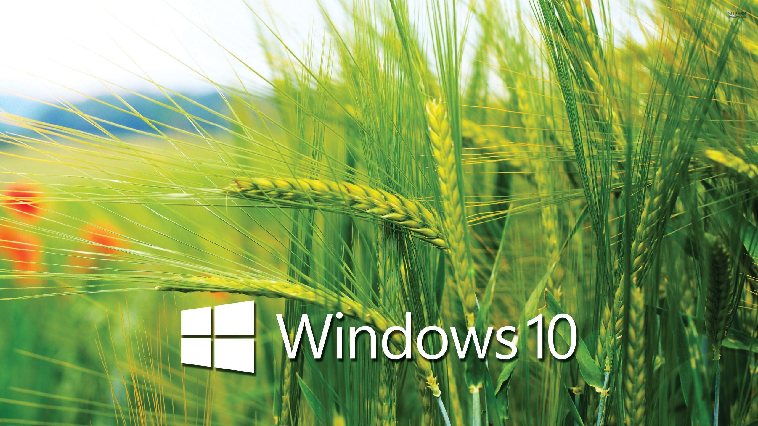 Image Result For Windows 10 Wallpapers Download Green Nature