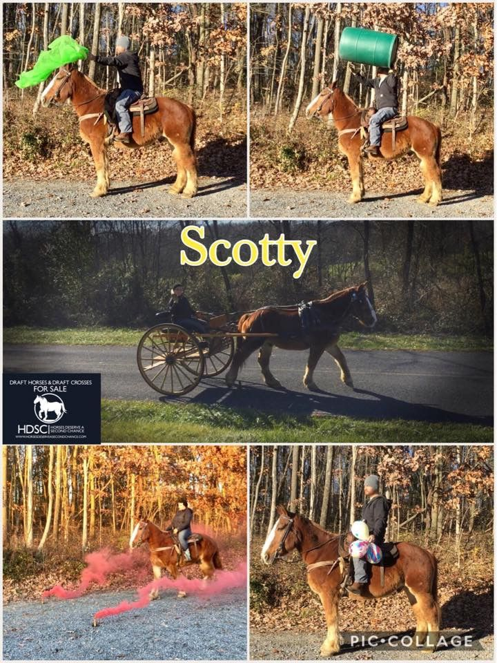 Pin by Horses deserve a second Chance on SOLD Horses 2017