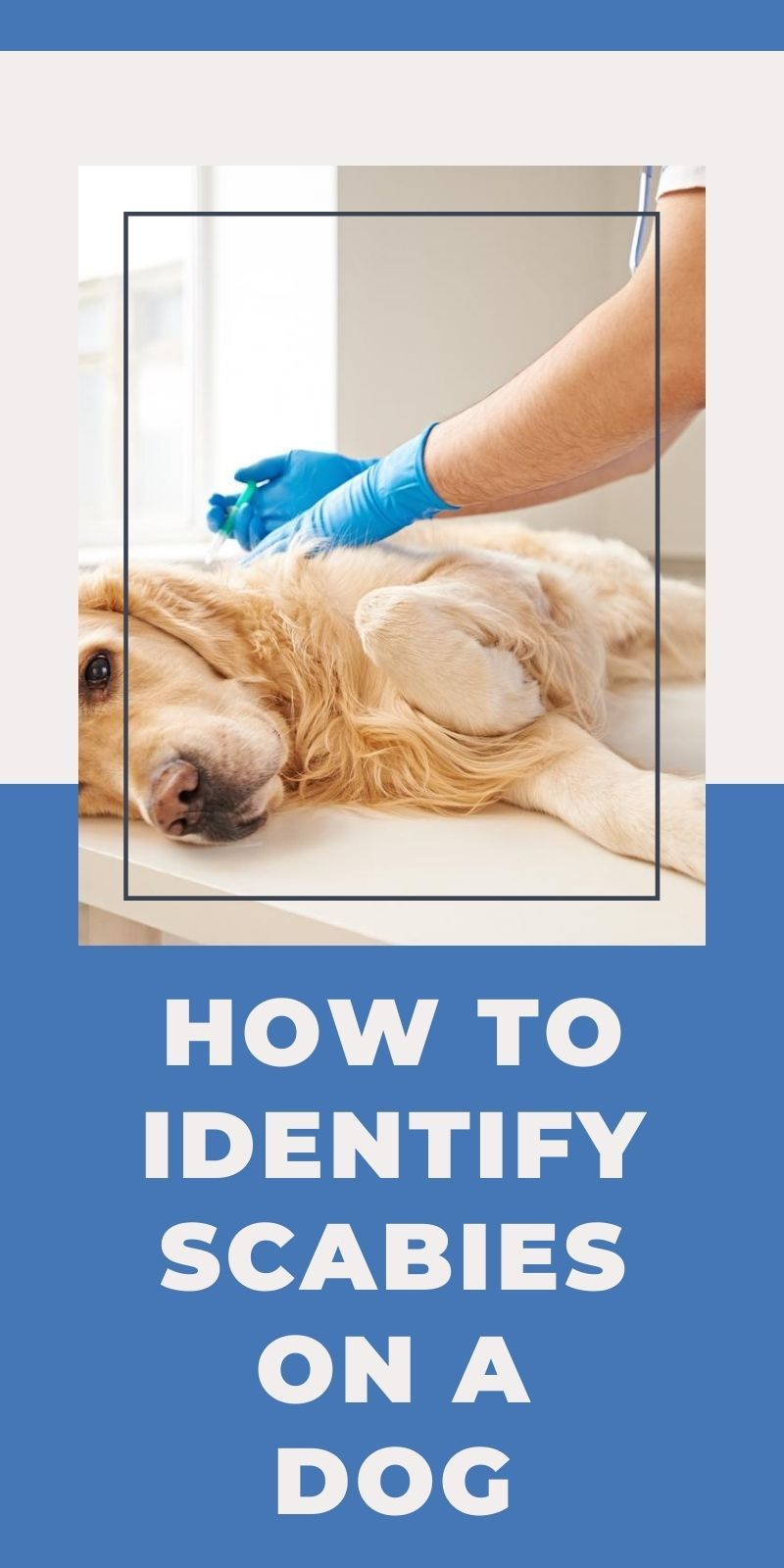 How to identify scabies on a dog in 2020 scabies dog