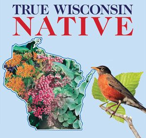True Wisconsin Native Plant Collection Available At Stein Gardens U0026 Gifts