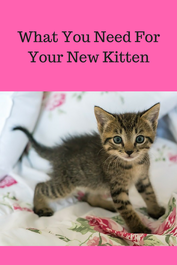 What You Need For Your New Kitten Tips From Lucy S Pet Care Kitten Supplies Dog Supplies List Pet Care