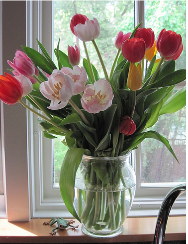 Tulips In Vase Tulips Mothers Day Flowers In Glass Vase Photog