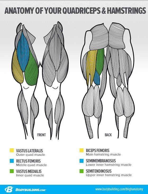 Fitness, fútbol, comer limpio,   Muscle anatomy   Pinterest ...