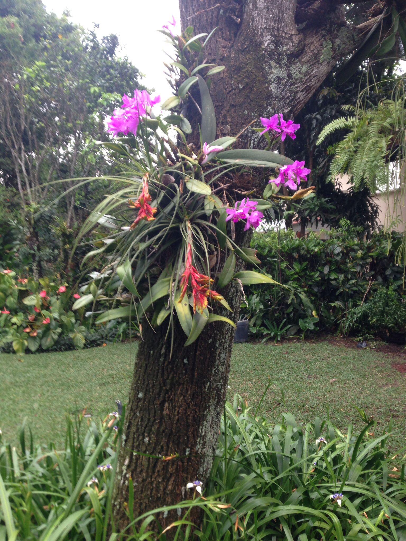 Orquideas silvestres jardin edith pinterest for Jardines de orquideas